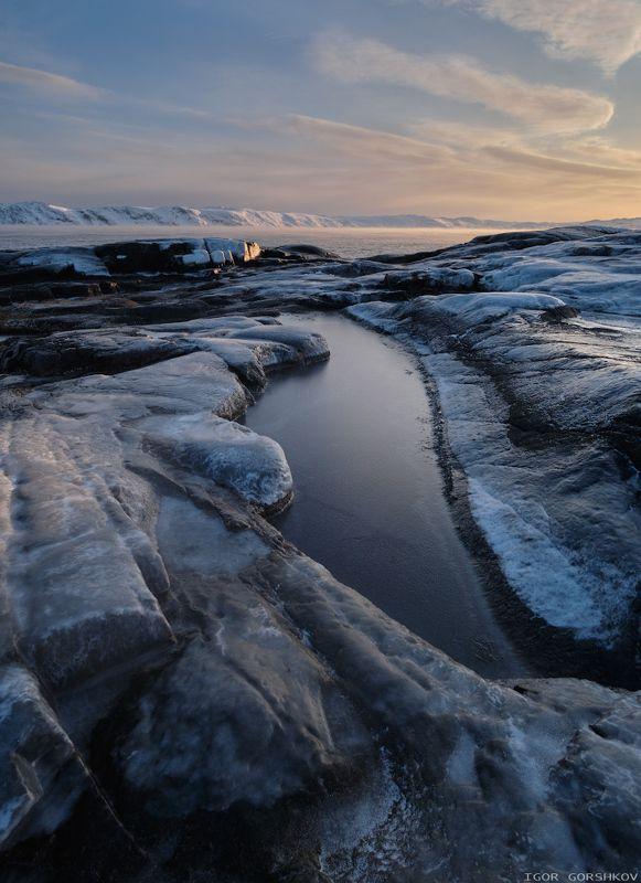 баренцево море,териберка,утро,зима,крайний север,заполярный круг,пейзаж,россия,,берег,снег,лёд,рассвет,камни,море, Ледяные берега, северные моряphoto preview