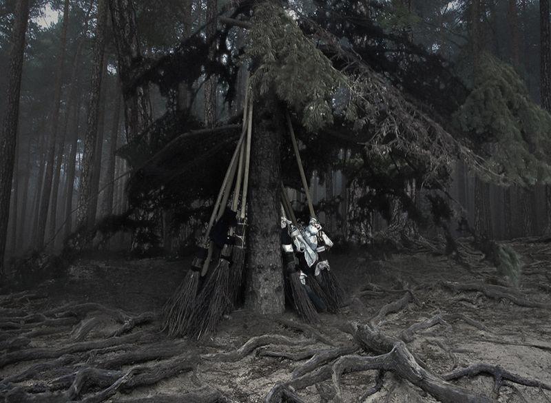 метла, лес, шабаш, фото на телефон, юмор, Parkingphoto preview