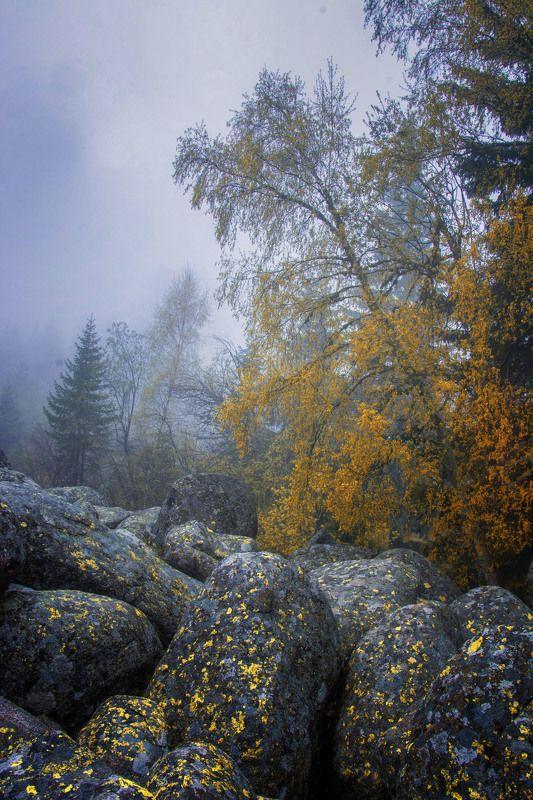 Autumn colorsphoto preview