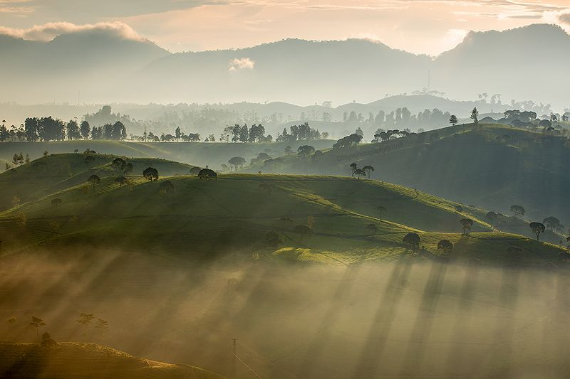 light,landscape,rol,rayoflight,green misty morningphoto preview