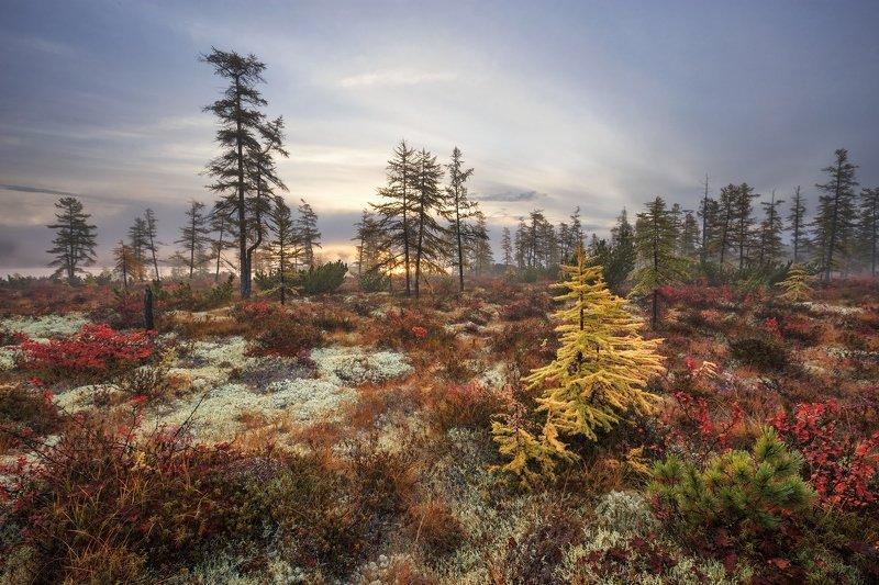 2018, россия, колыма, утро, осень, краски, лиственницы, мох, солнце, туман, тучи В золотомphoto preview