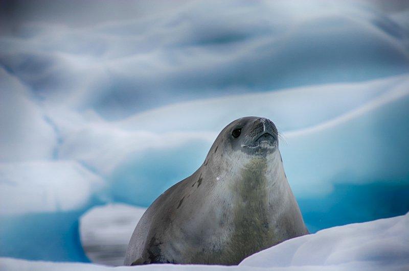 Антарктида 45photo preview