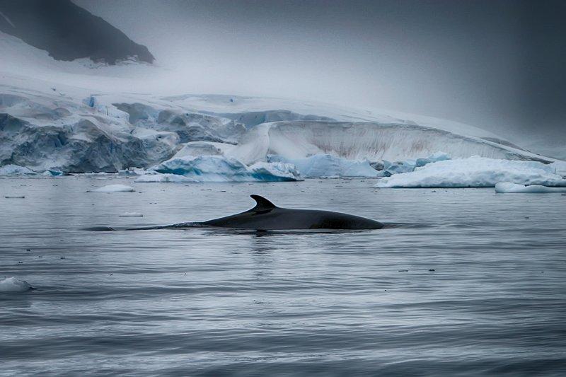Антарктида 48photo preview