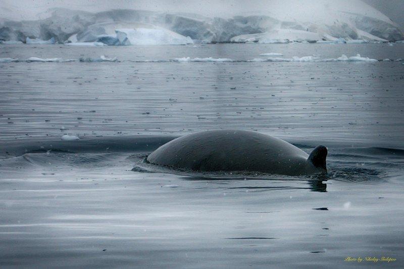 Антарктида 51photo preview