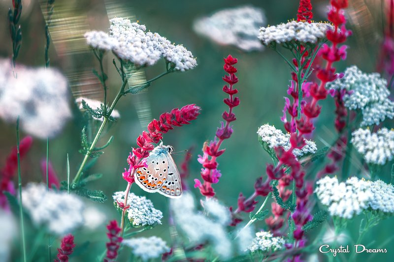 crystal dreams, macro, summer, color, art, nature, butterfly \