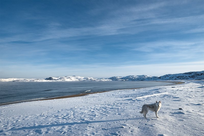 Териберка Берег Арктикиphoto preview