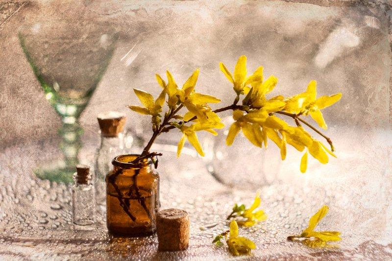 весна, форзиция, цветы, боке, капли, нежность, жёлтый Весенний мотивphoto preview