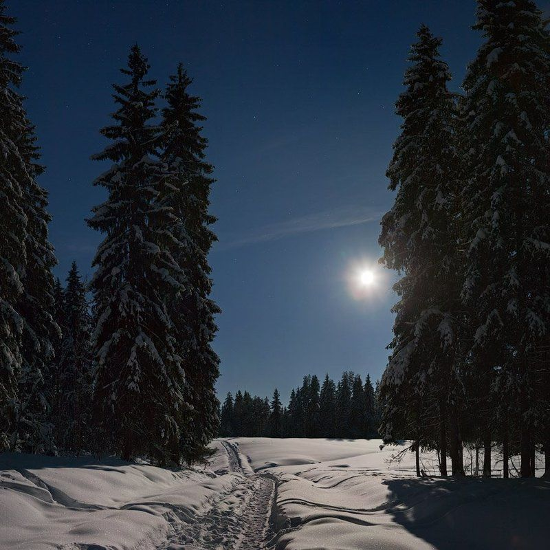 зимний, лес, лунной, ночью Зимний лес лунной ночьюphoto preview