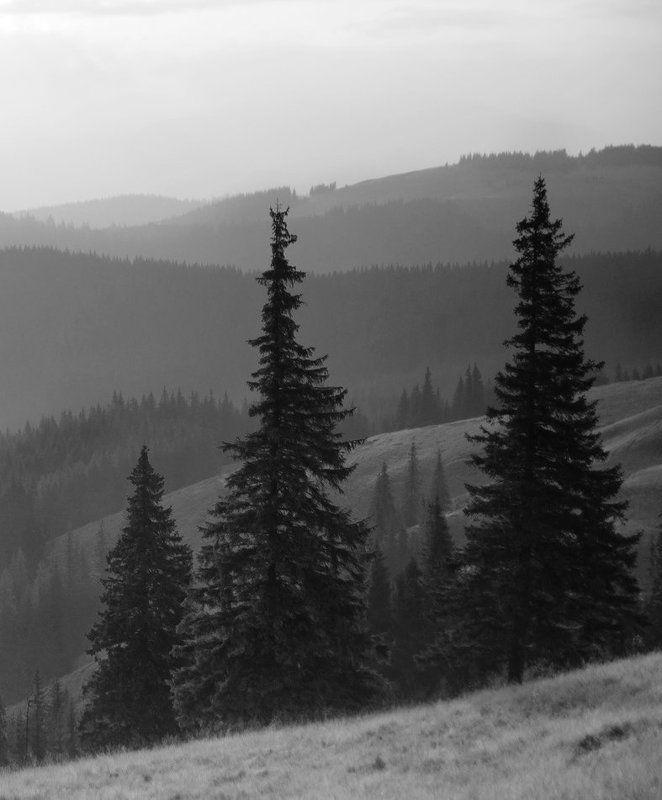 природа, пейзаж, панорама, карпаты, вечер |||||photo preview