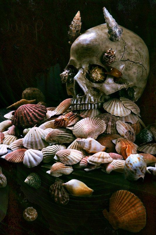 череп, морские раковины, ракушки, креатив Морской...photo preview