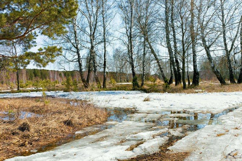 пейзаж, весна, природа, снег, лужи,  деревья, берёзы, сосны Апрельский снегphoto preview