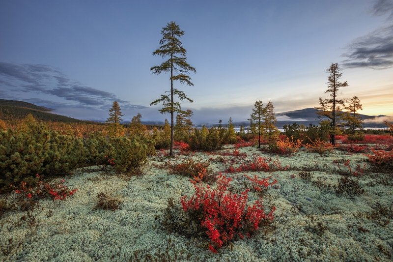 2018, россия, колыма, утро, осень, краски, горы, лиственницы, мох, туман ***photo preview