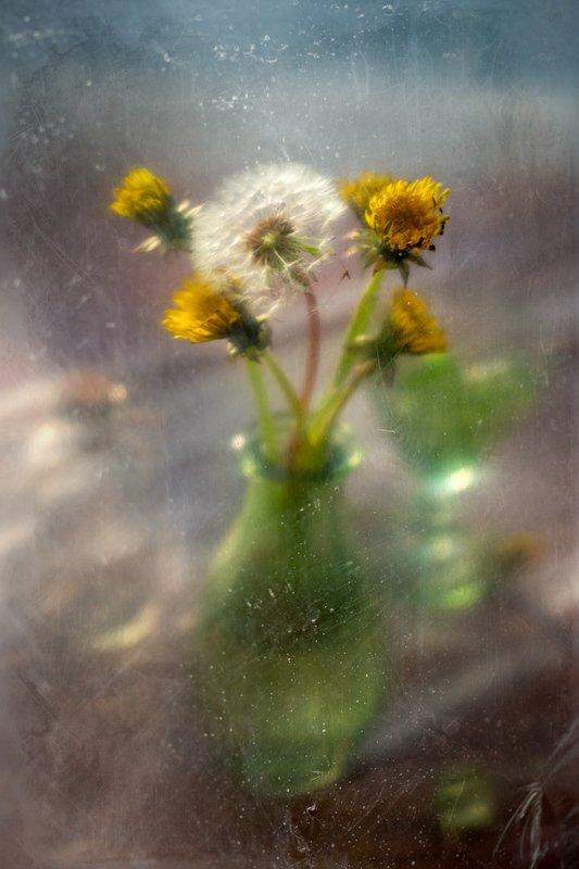 весна, тепло, вестник, одуванчик, цветы, натюрморт Вестник весныphoto preview