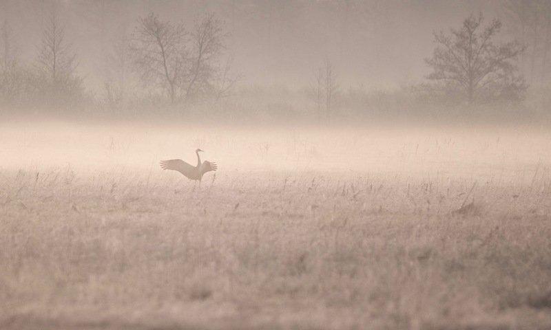 в туманphoto preview