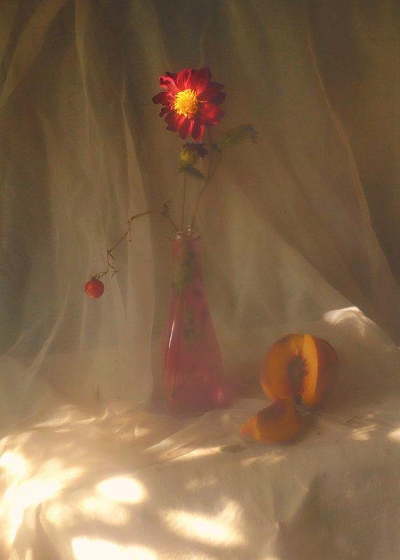 flowers,stillife,light,chrysanthemum chrysanthemumphoto preview