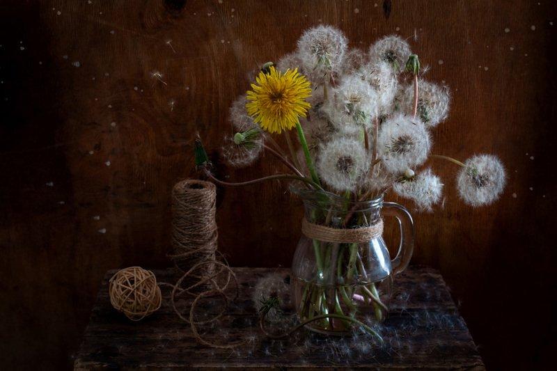 одуванчик, весна, настроение, акцент, контраст, натюрморт Настроение контрастовphoto preview