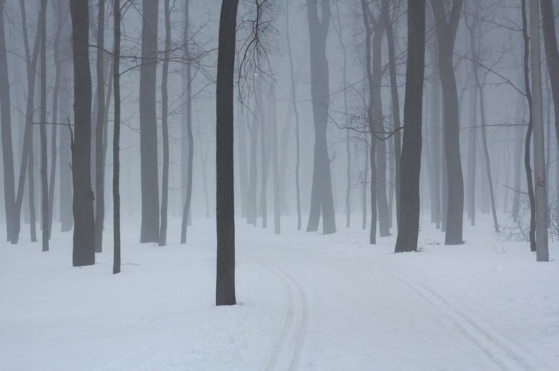 туман, лес Туманphoto preview