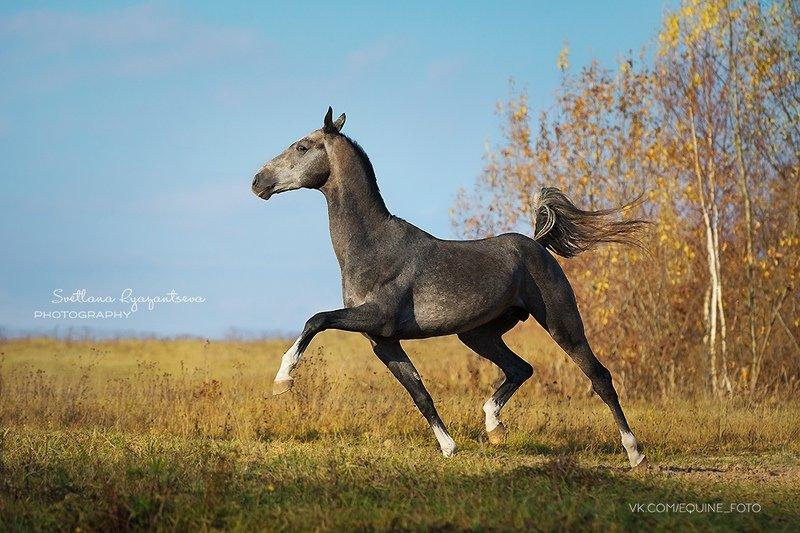 horse, лошадь, лошади, portrait Адаир Шаэльphoto preview