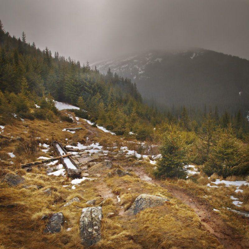 карпаты,смотрич,лес ****photo preview