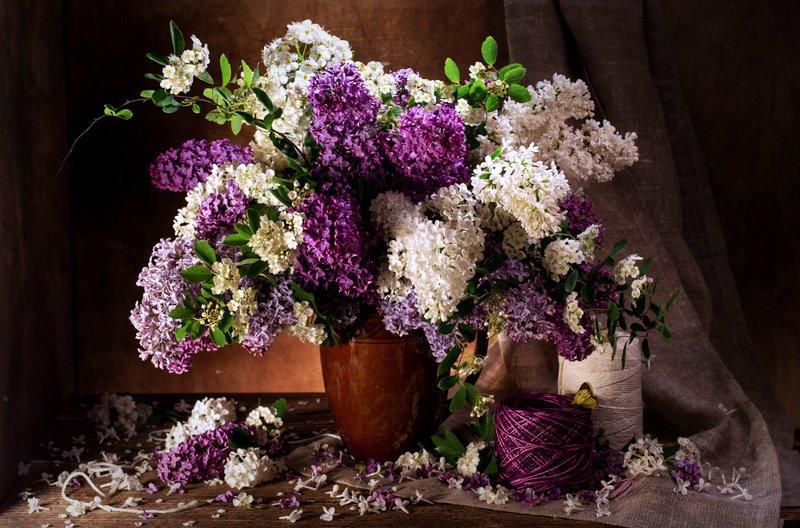 май, цветы, аромат, сирень, весна, букет, натюрморт Подарок маяphoto preview
