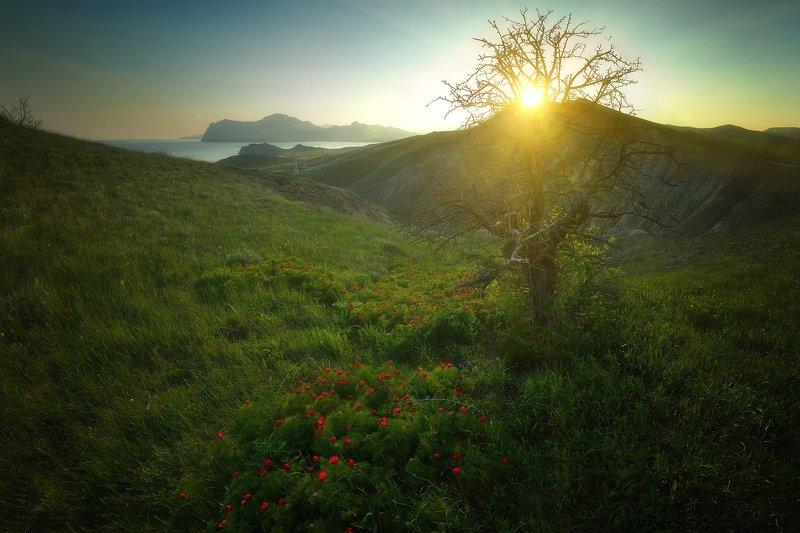 крым, природа, весна, горы, море Крымские горыphoto preview