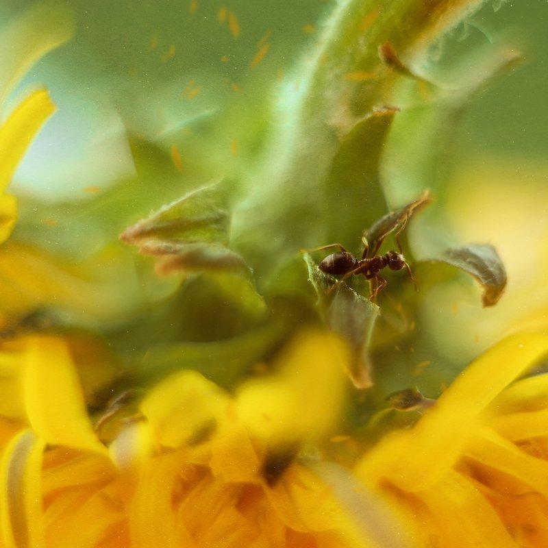 макро муравей гелиос  приключения муравьишкиphoto preview