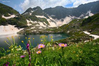 Цветы Дуккинского озера