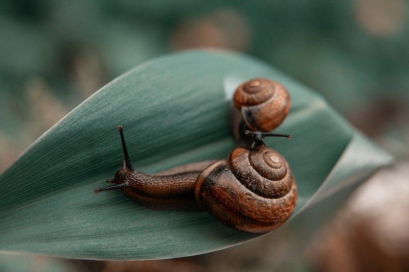 улитка макро макромир животные микрожизнь макро улиточки snails snail macro macroworld animals Кто здесь?photo preview