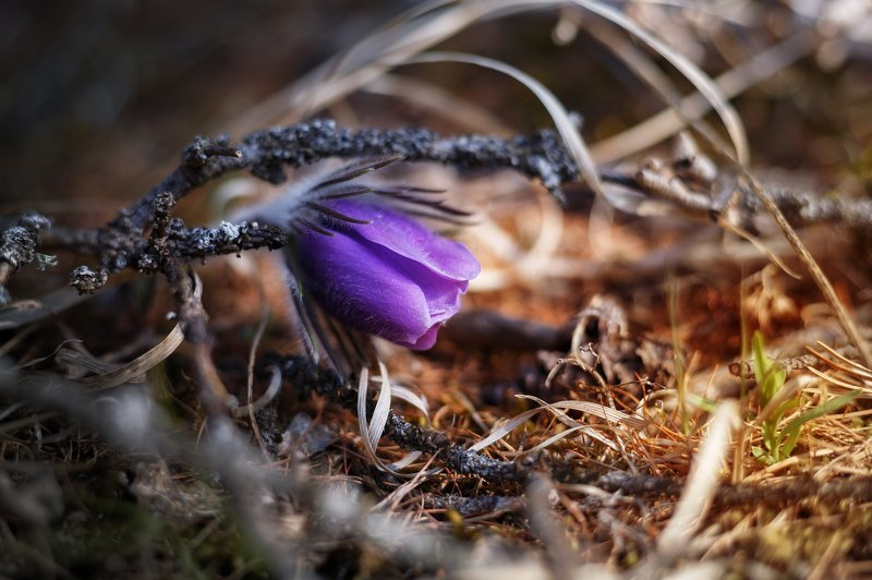 макро, цветы, цветок, природа Рассвет жизниphoto preview