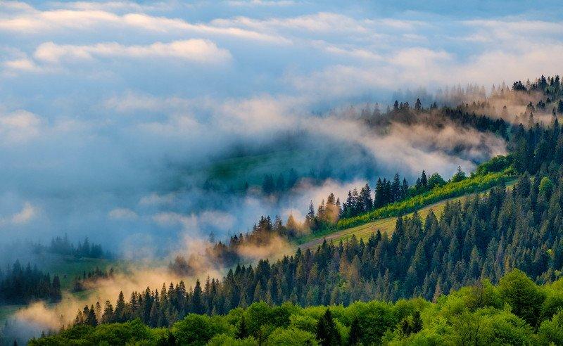 Лесные туманыphoto preview