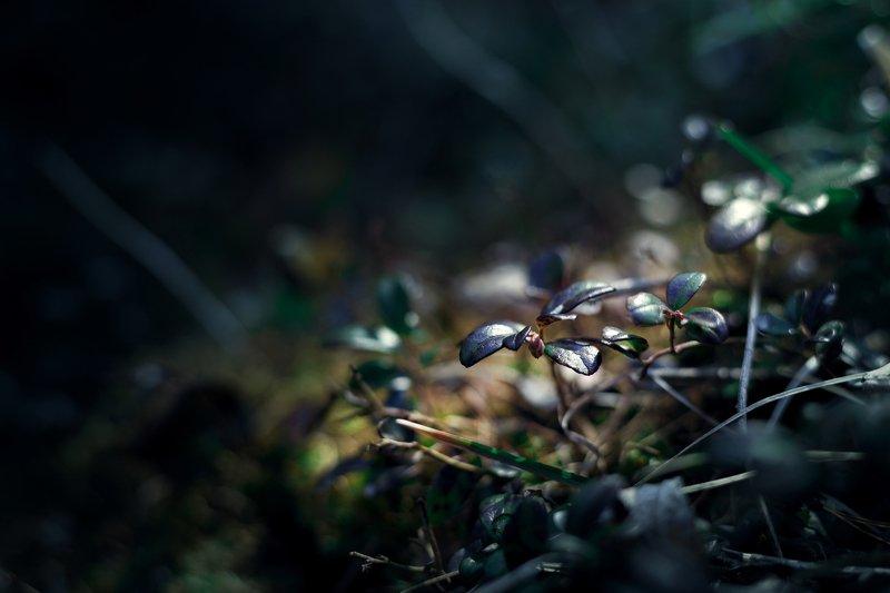 макро, природа, листья В лесуphoto preview