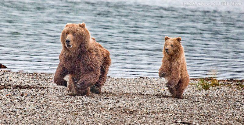 Карате по-медвежьи / Karate Cubphoto preview