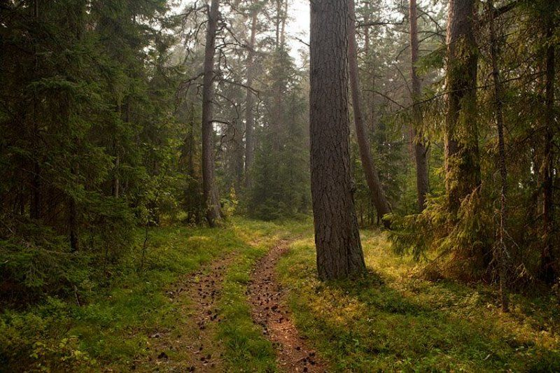 по, лесной, дорожке... По лесной дорожке...photo preview