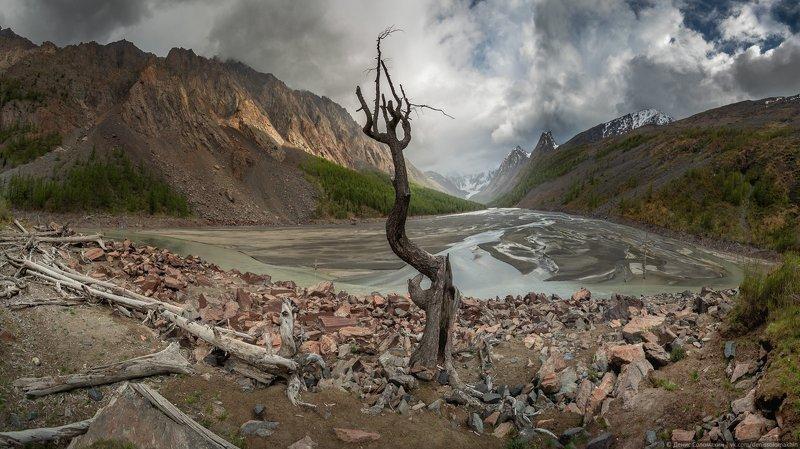 #алтай #маашей #мажой #цетральныйалтай #lake #mountainlake #deadlake #tree #nature #altai #nikon #nikond750 #panorama #pan #samyang #mountains #северочуйскийхребет #счх Душа мёртвого озераphoto preview