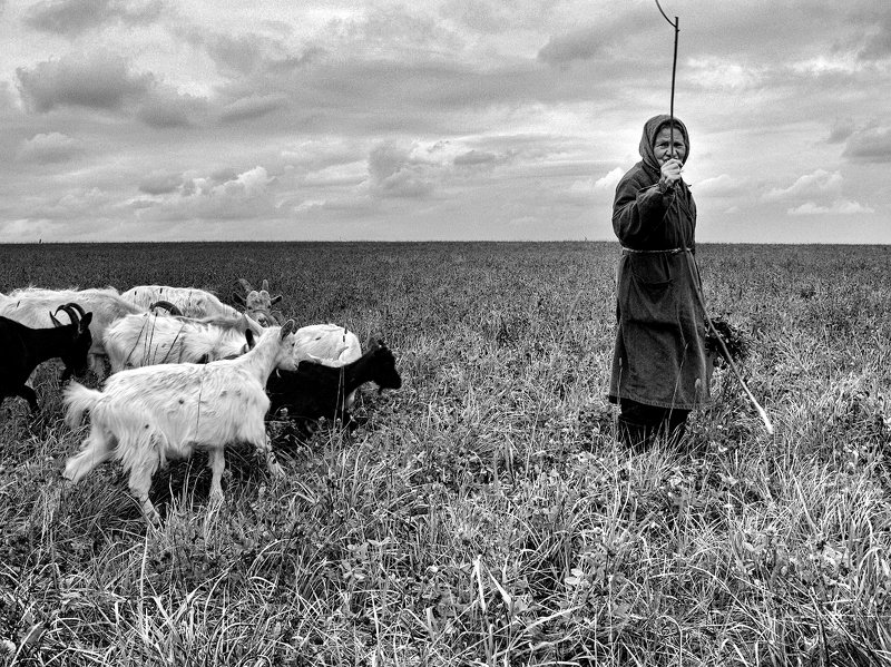 бабушка, козы, поле В полеphoto preview