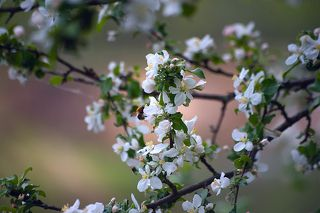 Pro тихие радости пасмурного весеннего дня...