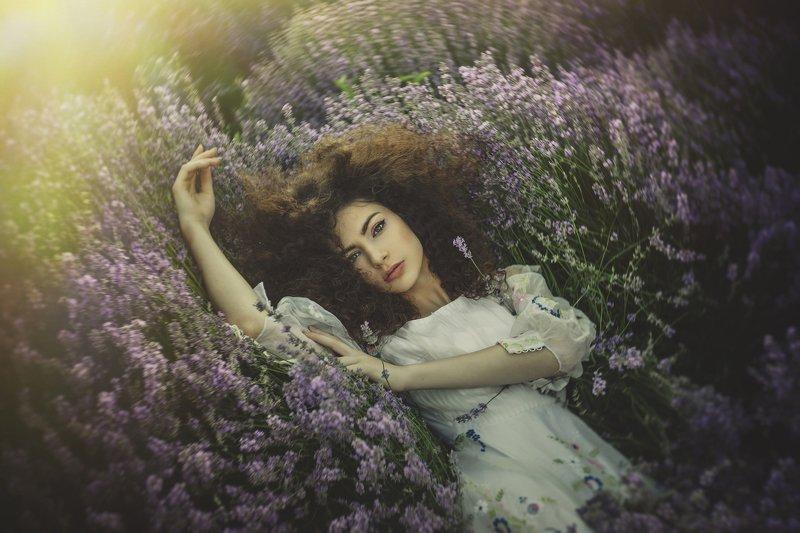lavender in a dreamphoto preview