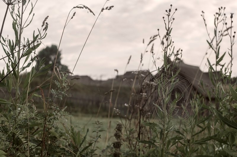 Некошеные травыphoto preview