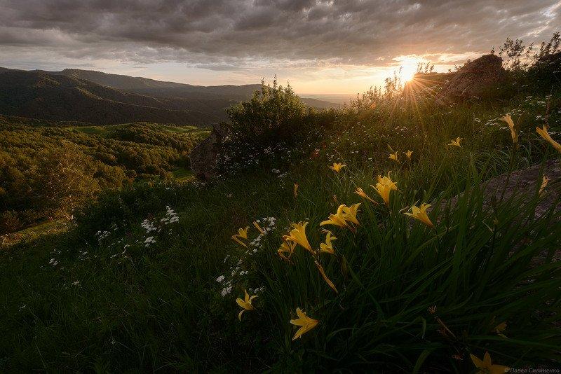 пейзаж, цветы, закат, солнце, лилейник, лучи, луг, лето, горы, алтай Красодневphoto preview