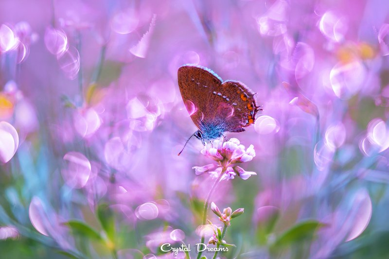 crystal dreams, macro, summer, color, art, nature, butterfly Meadow fairy talephoto preview
