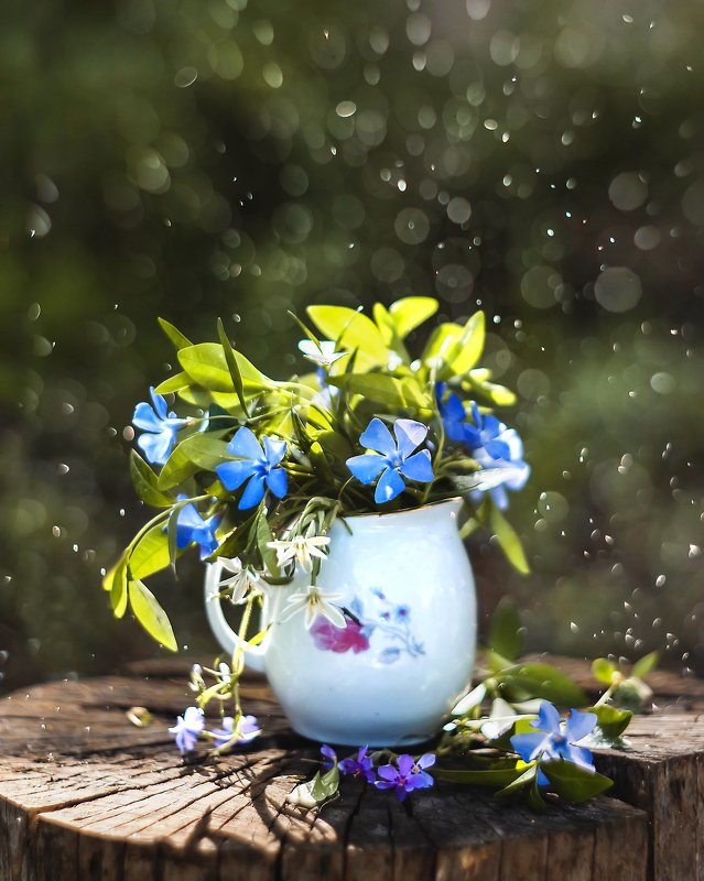 macro bokeh flowers amazing beautiful ***photo preview