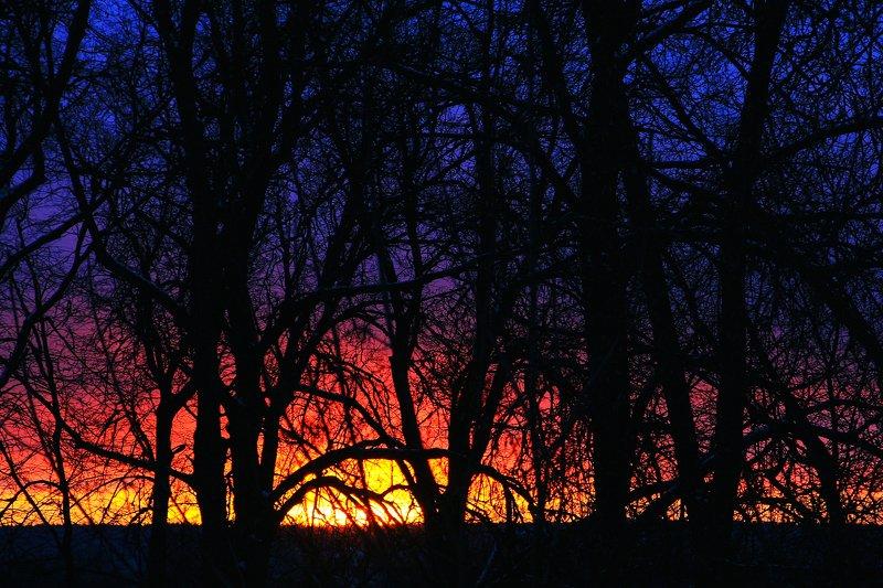 Закат в деревьяхphoto preview