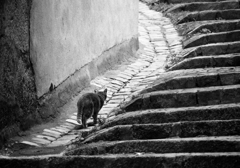 cat, city, path, stairs, way, old, road, animal, monochrome, geometry, stones, wall CatPathphoto preview