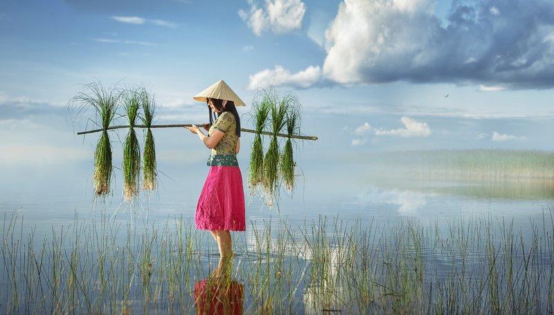 девушка, женский портрет, сборщица риса, поле, вода, вьетнам, азия, трава, шляпа, небо, трава, жанр, постановка Сборщица рисаphoto preview