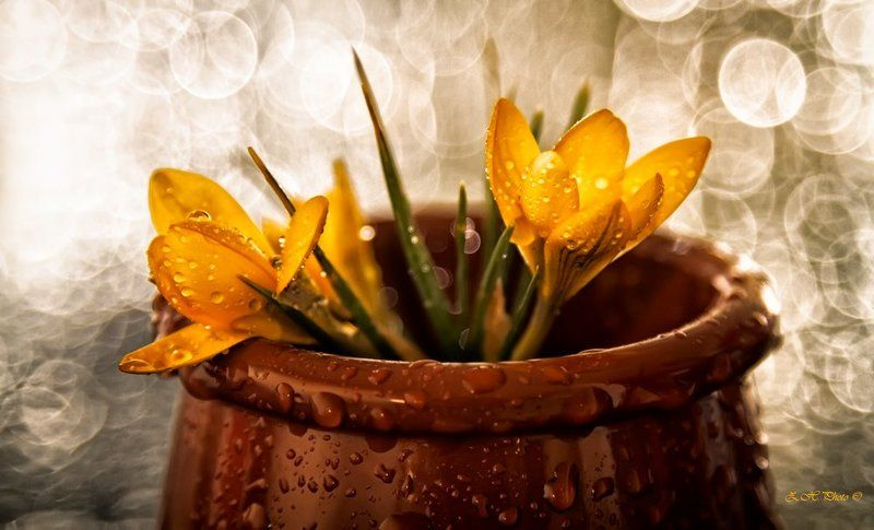 yellow, flowers, cup, bokeh, brown My own little gardenphoto preview