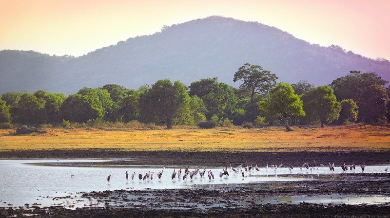 миннерия, шри-ланка, цейлон, пейзаж, птицы Миннерияphoto preview