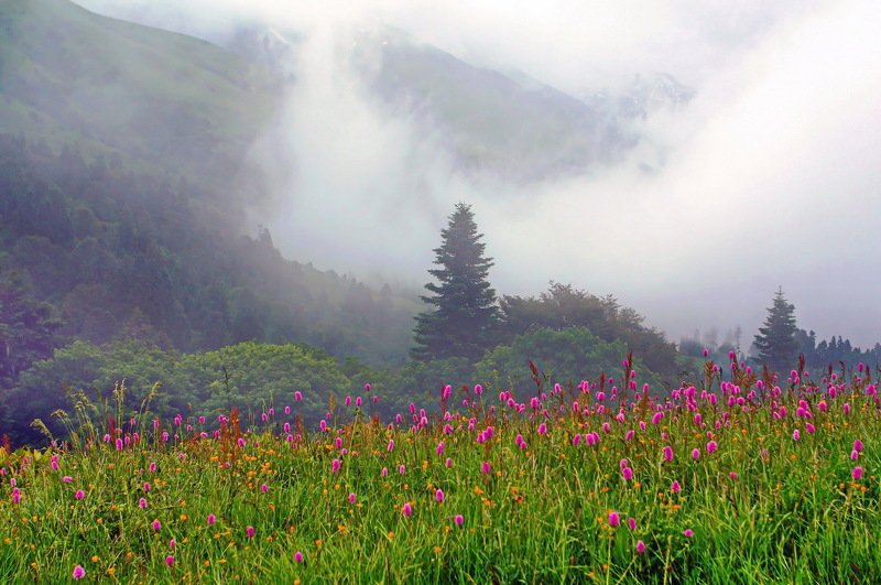 лето горы дождь В горах.photo preview