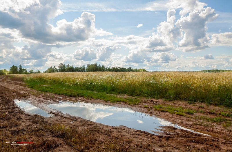 пейзаж,природа,поле,небо,облака,рожь, Июль.photo preview