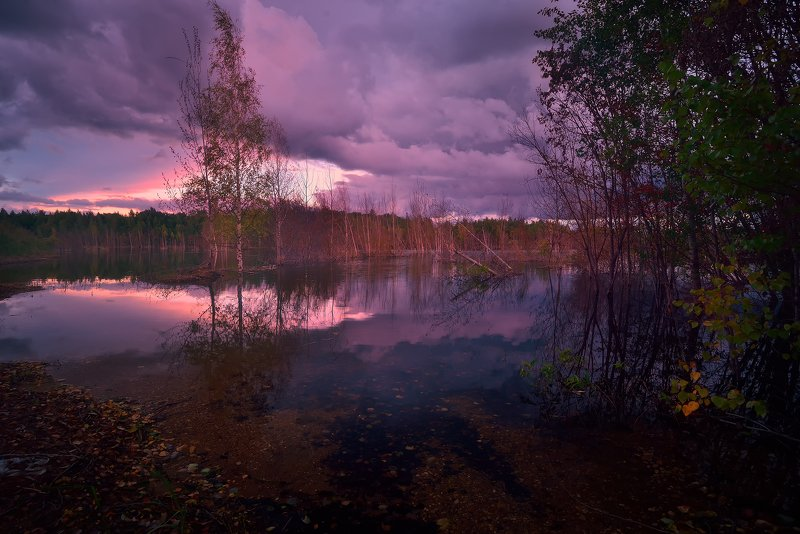 лес, природа, пейзаж, лето, река, вода, ручей, подмосковье Лето на карьереphoto preview