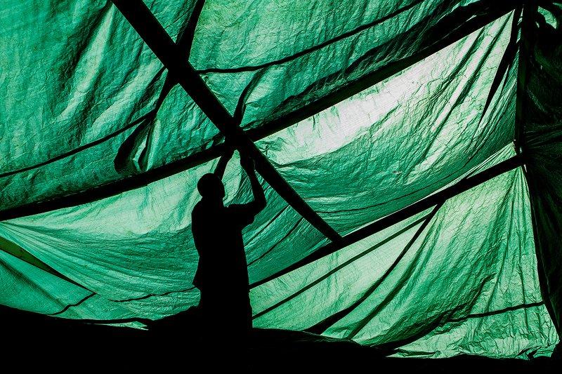 zebrophoto andrey veselov  андрей веселов  photo preview